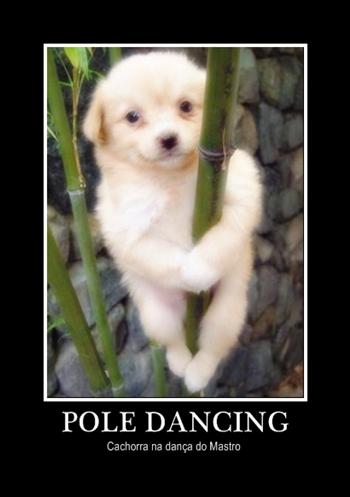 dança do mastro