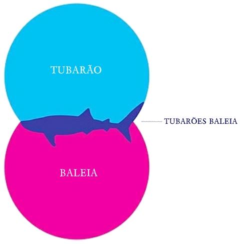 tubarao baleia1